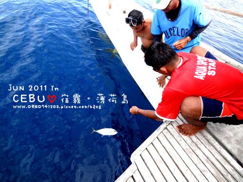 海豚11.jpg